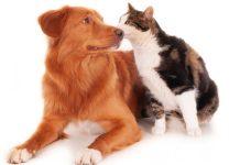 ¡Bien por los lomitos y michis! NL presenta reforma contra muerte y crueldad animal